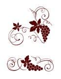 Ontwerpelement - wijnstok met wervelingen stock illustratie