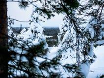 Ontwerpend het bos - rovaniemi - Lapland royalty-vrije stock afbeelding