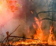 Ontwikkeling van bosbrand De vlam begint schade van boomstam stock afbeelding