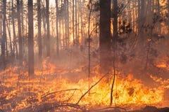 Ontwikkeling van bosbrand op zonsondergangachtergrond royalty-vrije stock fotografie
