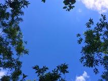Ontworpen blauwe hemel met bladeren en pluizige wolken Royalty-vrije Stock Foto