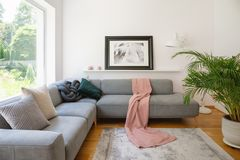 Ontworpen foto boven een bank met roze deken en kussens in een wit woonkamerbinnenland met een grote, groene palminstallatie royalty-vrije stock fotografie