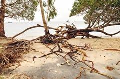Ontwortelde bomen en stranderosie na het tropische eiland van cycloonklappen Royalty-vrije Stock Afbeeldingen