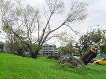 Ontwortelde bomen op de Bundel, Townsville, Australië na Cyclon Stock Afbeelding