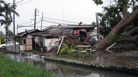 Ontwortelde boom met overstroomd gebied na onweer Stock Foto