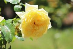 Ontzagwekkend beeld van Bloemen stock foto's