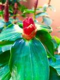 Ontzagwekkende bloem Royalty-vrije Stock Afbeelding