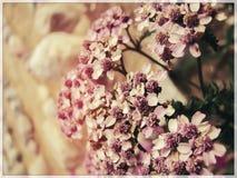 Ontzagwekkende bloemen Royalty-vrije Stock Foto