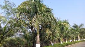 Ontzagwekkende groene weg beide zij lange tropische bomen Stock Foto