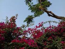 Ontzagwekkende kleine magenta bloemen met boom bovendien Stock Fotografie