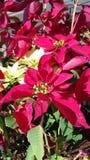 Ontzagwekkende rode en gele bloemen Royalty-vrije Stock Afbeelding