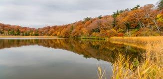 Onumavijver in de herfstseizoen, Hachimantai Stock Foto's