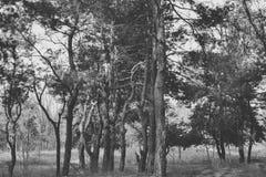 Onverbiddelijk bos royalty-vrije stock foto
