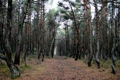 Onverbiddelijk bos in de herfst stock foto