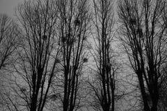 Onverbiddelijk landschap - bomen en nesten tegen de achtergrond van de nachthemel stock afbeelding