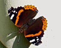 Onverschrokken vlinder jpg Stock Afbeeldingen