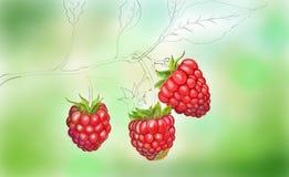 Onvolledige rospberry kunst stock afbeeldingen