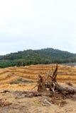 Onvruchtbaar bos Stock Foto