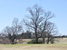 Onvruchtbaar Forest Trees Stock Foto