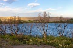 Onvruchtbare bomen door het meer. Royalty-vrije Stock Afbeeldingen