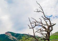 Onvruchtbare boomtakken tegen de hemel in Montana met exemplaarruimte stock fotografie
