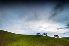 Onvruchtbare droge boom op groen hellingsweiland Nuttig als achtergrond Royalty-vrije Stock Foto's