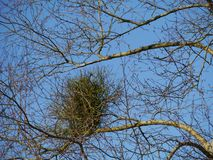 Onvruchtbare takken van een boom in de lente Royalty-vrije Stock Fotografie