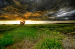 Onweer die bij het padiegebied tijdens zonsondergang komen stock afbeeldingen