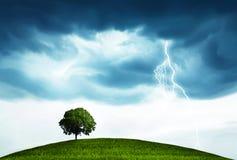 Onweer en boom Stock Foto's