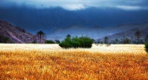Onweer in Marokko Royalty-vrije Stock Foto