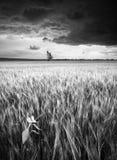 Onweer op een tarwegebied Zwart-wit kleuren Stock Fotografie