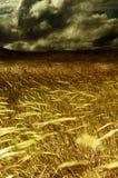Onweer op het oogstgebied Royalty-vrije Stock Afbeeldingen
