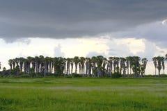 Onweer over palmen Stock Afbeelding