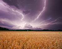 Onweer over tarwe Stock Foto's