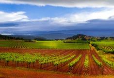 Onweer over wijngaarden Royalty-vrije Stock Afbeeldingen