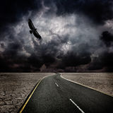 Onweer, vogel, weg in woestijn Royalty-vrije Stock Foto