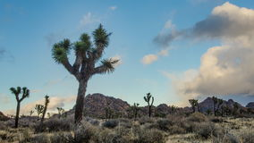 Onweersbroodjes in Joshua Tree-TL stock footage