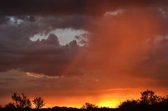 Onweersbui boven Afrikaanse savanne Stock Foto
