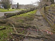 Onweersschade aan bomen stock foto