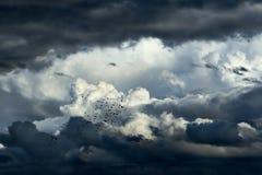 Onweerswolken Stock Fotografie