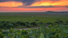 Onweerswolken in de bergen in Kazachstan Timelapse 4K stock videobeelden