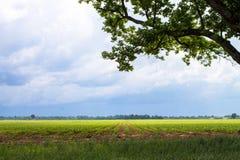 Onweerswolken die over landbouwgrond naderbij komen Stock Foto's