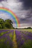 Onweerswolken en regenboog over lavendelgebied Stock Foto's