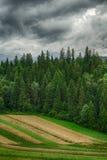 Onweerswolken over het bos Stock Foto