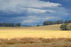 Onweerswolken over NSW-landbouwgrond stock afbeelding