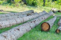 Onwettig cutted pijnboom het programma opent het hout, erachter lefted royalty-vrije stock afbeelding