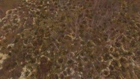 Onwettige ambermijnbouw Gevolgen van het amber graven bij de herfst stock footage