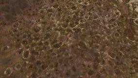Onwettige ambermijnbouw Gevolgen van het amber graven bij de herfst stock video