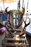 Onwettige handel van dierenorgaan in markt Royalty-vrije Stock Foto's