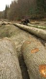 Onwettige ontbossing stock afbeelding